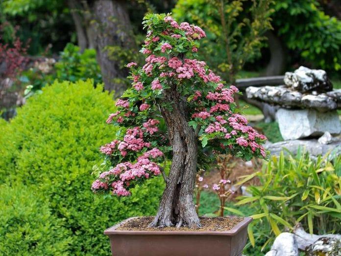 stili dei bonsai